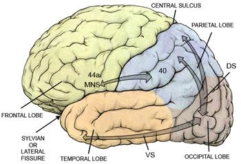 Visual Test To Quickly Check Brain >> Lea Test Ltd